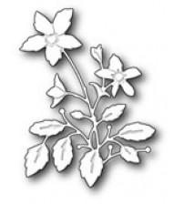 Die-Lenora Bloom