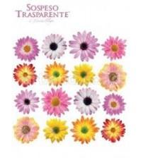 Sospeso Printed Plastic Sheet - Daisy